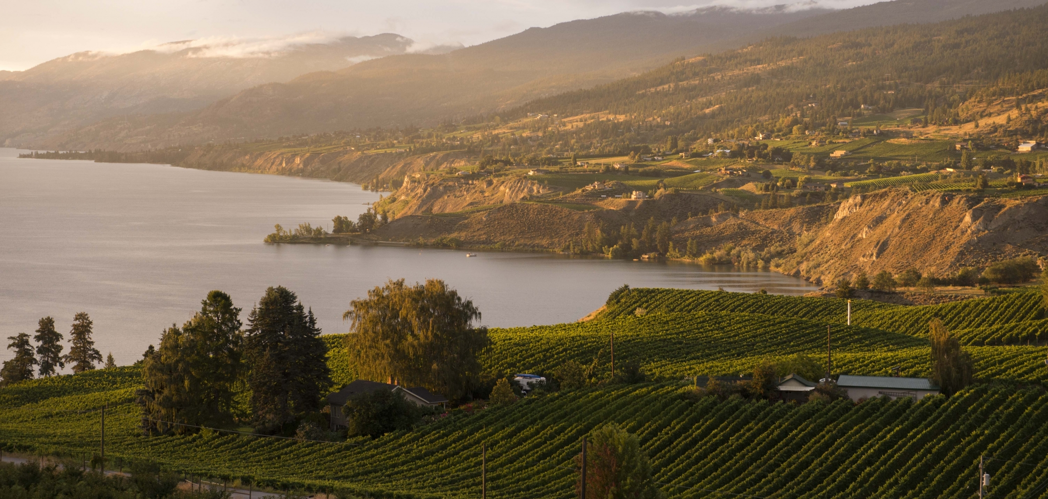 The sunset view of the vineyards on the east side of Okanagan Lake towards Naramata from Munson Mountain, Penticton, BC.